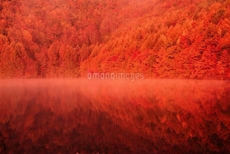 朝日に染まる紅葉の桧原湖の写真素材 [FYI01814130]