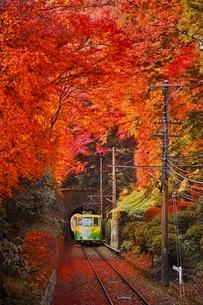 紅葉した高尾山を登るケーブルカーの写真素材 [FYI01814176]