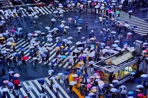 雨の日に大勢の人々が傘をさして渡る渋谷のスクランブル交差点の写真素材 [FYI01814239]