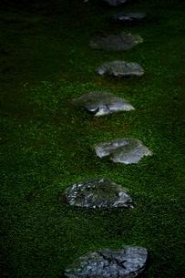 苔の庭に一列に並ぶ踏み石の写真素材 [FYI01814259]