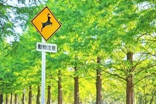 動物注意の交通標識の写真素材 [FYI01814276]