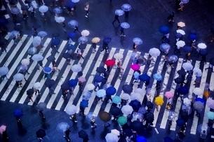 雨の日に大勢の人々が傘をさして渡る渋谷のスクランブル交差点の写真素材 [FYI01814283]
