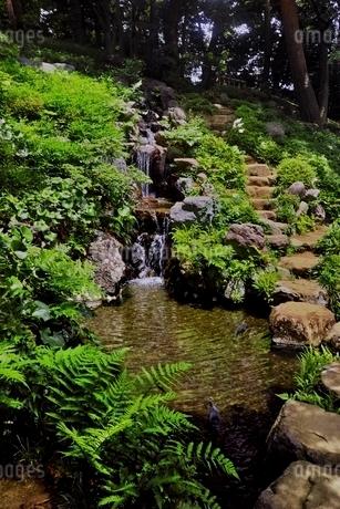 新緑の殿ヶ谷戸庭園の写真素材 [FYI01814285]