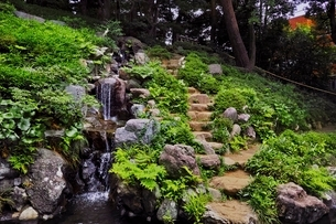 新緑の殿ヶ谷戸庭園の写真素材 [FYI01814349]