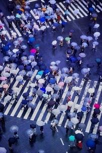 雨の日に大勢の人々が傘をさして渡る渋谷のスクランブル交差点の写真素材 [FYI01814352]