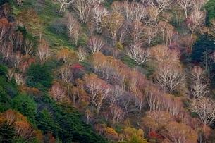 秋の山肌の写真素材 [FYI01814357]