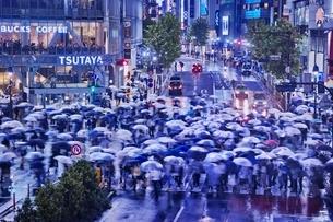 雨の夜に混雑する渋谷スクランブル交差点の写真素材 [FYI01814401]