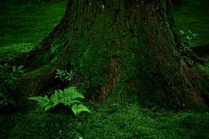 苔庭の写真素材 [FYI01814495]