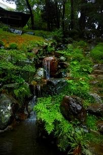 しっとりとした雨の日の殿ヶ谷戸庭園の写真素材 [FYI01814535]