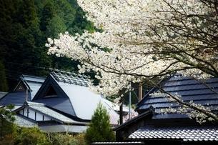 桜咲く鞍馬の町並みの写真素材 [FYI01814560]
