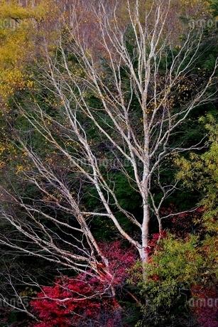 秋の山肌の写真素材 [FYI01814620]
