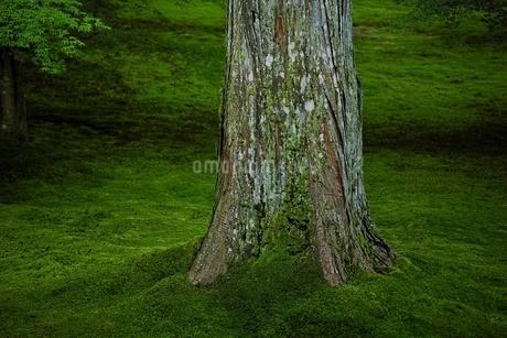 苔庭の写真素材 [FYI01814657]