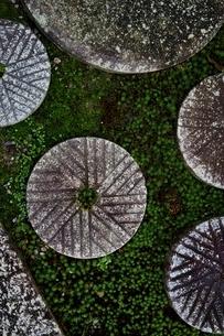 石臼と苔の庭の写真素材 [FYI01814758]