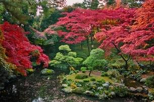 美しく紅葉した殿ヶ谷戸庭園の写真素材 [FYI01814797]