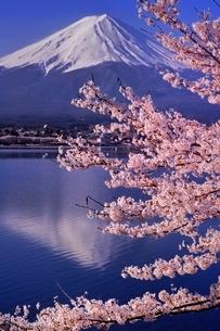 桜満開の河口湖から望む富士山の写真素材 [FYI01814799]