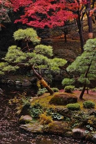 美しく紅葉した殿ヶ谷戸庭園の写真素材 [FYI01814879]