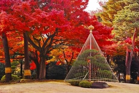 美しく紅葉した殿ヶ谷戸庭園の写真素材 [FYI01814904]