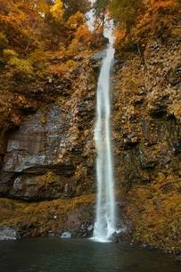 秋の阿弥陀ヶ滝の写真素材 [FYI01815142]