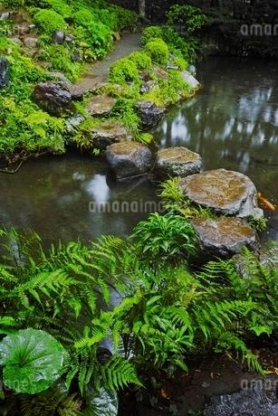 しっとりとした雨の日の殿ヶ谷戸庭園の写真素材 [FYI01815192]