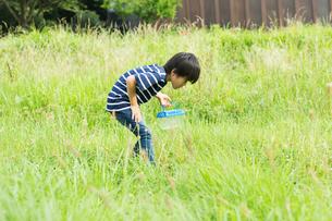 虫取りをする小学生の写真素材 [FYI01815306]