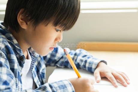 勉強する小学生の男の子の横顔の写真素材 [FYI01815337]