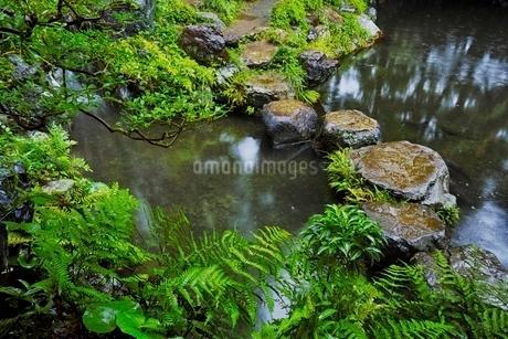 しっとりとした雨の日の殿ヶ谷戸庭園の写真素材 [FYI01815365]