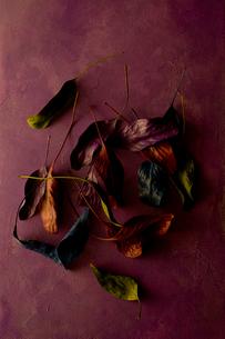スティルライフ(草木)01の写真素材 [FYI01815714]