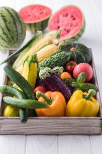 夏野菜集合の写真素材 [FYI01816089]