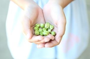 ひよこ豆の写真素材 [FYI01816182]