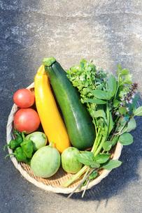 夏野菜の写真素材 [FYI01816254]