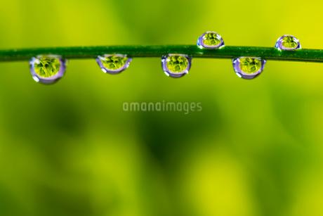 花と滴の写真素材 [FYI01816263]