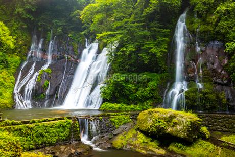 白水の滝の写真素材 [FYI01816381]