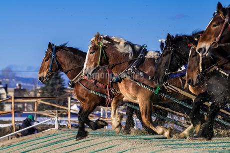 ばんえい競馬の写真素材 [FYI01816429]