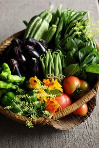 夏野菜の写真素材 [FYI01816455]