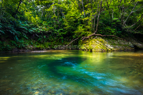 やんばるの川の写真素材 [FYI01816473]