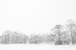 雪の大沼公園の写真素材 [FYI01816485]