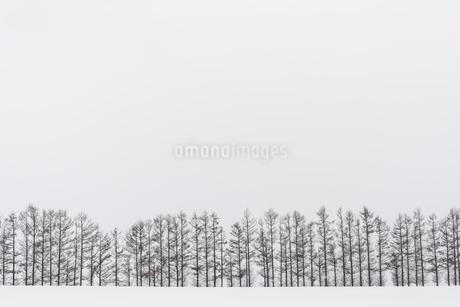 北海道 美瑛町 冬の写真素材 [FYI01816555]