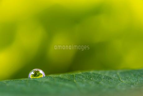 花と滴の写真素材 [FYI01816618]