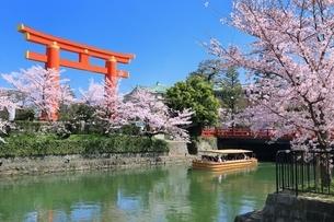 岡崎疎水・桜回廊と平安神宮の鳥居の写真素材 [FYI01816653]