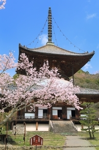根来寺大塔とサクラの写真素材 [FYI01816657]