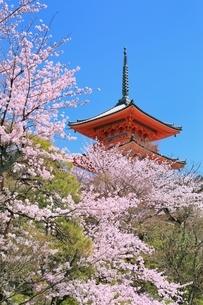 清水寺の三重塔とサクラの写真素材 [FYI01816663]