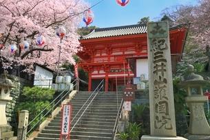 紀三井寺楼門とサクラの写真素材 [FYI01816711]