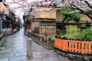 祇園白川のサクラの写真素材 [FYI01816721]