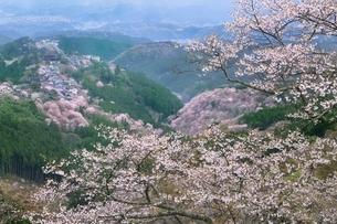 吉野山のサクラの写真素材 [FYI01816754]