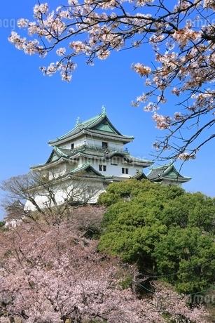 和歌山城天守閣とサクラの写真素材 [FYI01816764]