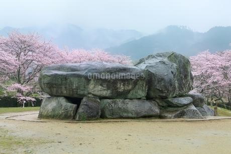 石舞台古墳とサクラの写真素材 [FYI01816792]
