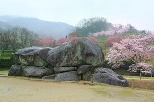 石舞台古墳とサクラの写真素材 [FYI01816809]