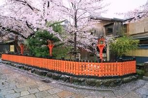 祇園白川のサクラの写真素材 [FYI01816840]