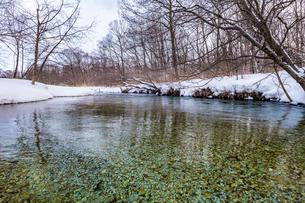 北海道 釧路川 源流域の写真素材 [FYI01816843]