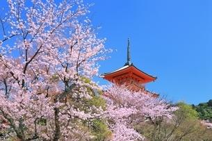 清水寺の三重塔とサクラの写真素材 [FYI01816907]